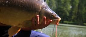etangs de bonnevaux terres de berlioz poisson